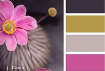 Color Inspirations / by Grauers Decorating Center Lancaster Pa