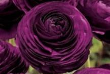 Splendid Spring Flowers / Splendid Market's beautiful collection of Spring Flowers