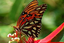 Butterflies / Another one of God's great flying beauties. / by Robert Potillo
