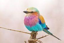 Birds / by Gemma Thérèse Pearce