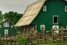 Barn Owl / Old barns <3