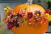 Haunting Halloween / Pumpkin decorating ideas, costume inspiration, & Halloween decor
