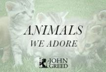 A N I M A L S / Jewellery for all the animal and pet lovers out there featuring the likes of #Pandora #Nomination #Thomas Sabo and more....from #johngreedjewellery