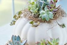 Fall Decor Ideas / Crisp apples, cool air, pumpkin everything...we cannot wait for fall!