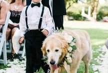 Adorable pets at Weddings / Puppies, kittens, ponies, llamas, and pot-bellied pigs. There's nothing more wonderful than including four-legged friends in your wedding.