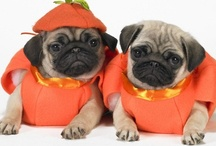 BEST DOGS EVER!!!! / Pugs are the cutest, funniest, best dogs EVER! Once you go pug, you never go back! / by Sidra