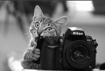 animals / cute animals make me smile :)