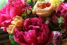 Flowers & Buquets