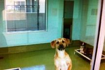 Dog Housing / by Shelter Medicine