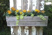 Gardening / by Karina Carter