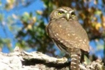 Owls Owls Owls / www.WilburHotSprings.com is an off grid/solar powered turn-of-the-century hotel with natural hot mineral springs located on an 1800 acre Nature Preserve in Northern California. Time To Slow Down... / by Wilbur Hot Springs