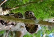 """Night Owls"" / by Kathy Woody"