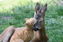 Animals / by Dorien Wuring