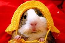 Cute Overload / fuzzy, fuzzy, cute, cute / by Allison Solberg