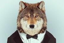 Alpha Lobo.... / Aka Wolves / by Matt Vigil