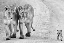 The Wild / by Bethany Modjeski