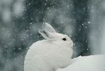 Bunny / Snuggly, lovely, bunny. / by Kya O