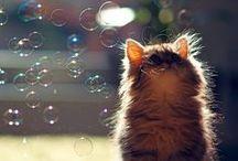 Cat / by Kya O