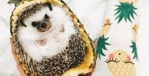 only hedgehogs.