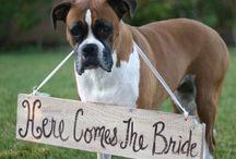 Wedding Stuff / by Lauren Brookins Bryant