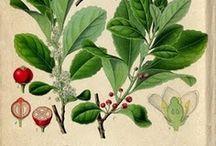 Esencias - Plantas