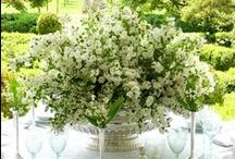 Green Weddings / by abbey & izzie designs