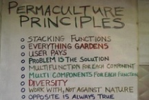 Sustainability and Permaculture / by à la parisienne