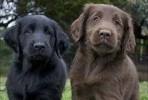 Dogs other than OES. / All dogs excluding OES.  / by Susan Baty