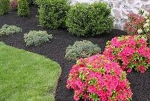 Lawn Perfect / Take steps now to ensure a carpet of gorgeous green in your yard in the coming months. / by Swingle