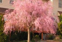 Terrific Trees / Lovely, Heroic Trees / by Lynda Morgan