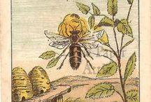 Honeybee Cottage / by Patricia Polzin