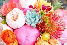Flowers / by Swingle