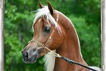 For the love of horses / by Jolene Edwards