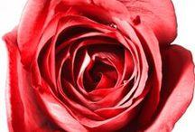 Love Flowers / by Kelley Kennedy