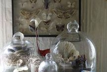Curiosities + Collections / The strange and beautiful. Vintage, antique and new collections of objects and things. Plus ideas for displaying collections. / Nature / Antique / groupings / Display / Skulls / cloche / flowers / shells/ victorian / gallery wall /