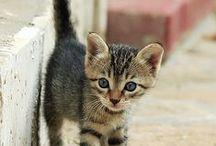I love cats / by Gabriela Terán