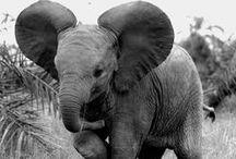 My Elephant Addiction / by Erin Elizabeth