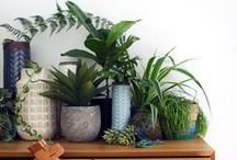 Decor - plants / by hello_mcee