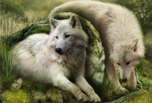 Wolves / I love wolves / by angelcords