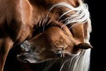 Animals / by Terri Price