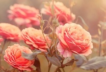 FLOWER GARDEN / If I'm in a bad mood...I will just click on this page and it will lift it ♥