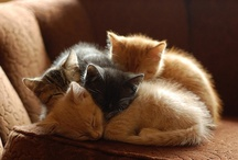 gatti,cats,chats.... / by Antonella Sambarino