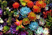 Garden Ideas / by Kathryn Leathers