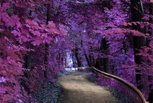 Luscious Purple / ANYTHING PURPLE