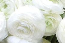 White Blooms / Flora Fetish hand-picked wedding inspo!