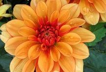 Orange Blooms / Flora Fetish hand-picked wedding inspo!