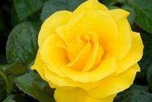 Yellow Blooms / Flora Fetish hand-picked wedding inspo!