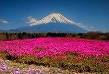 Beautiful Japan / by dEbbiE ~