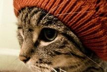 MeowBoard / by Megan Taylor