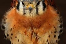 Birds / by Kathleen Syracuse
